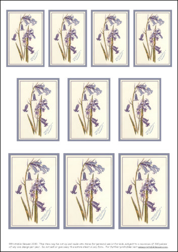 Download - Motifs - Bluebells