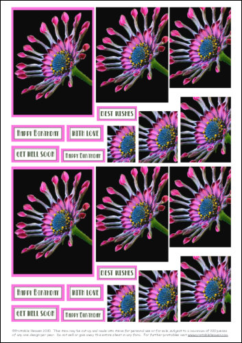 Download - Pyramage - African Daisy