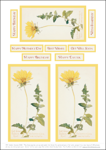 Download - Cut-leaved Balsam Root - Motifs