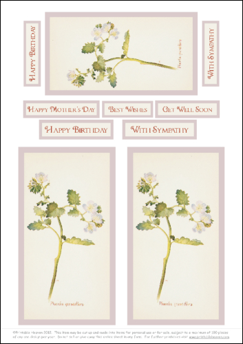 Download - Phacelia Grandiflora - Motifs