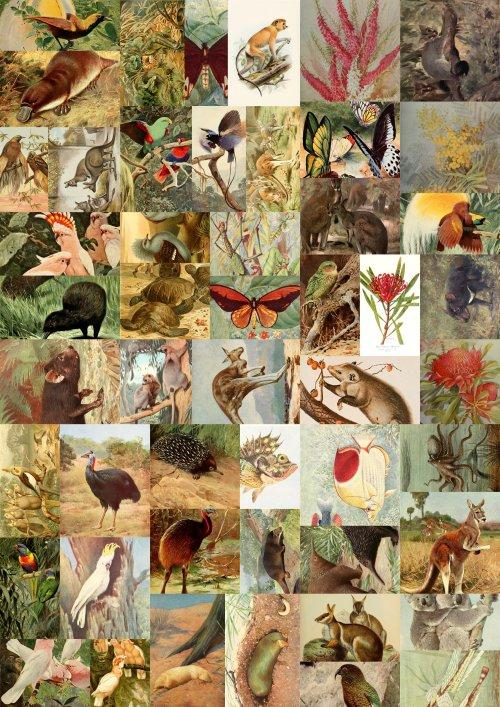 5203eefa2edfcaustralian-wildlife-collage.jpg