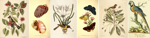 Antique Natural History Prints
