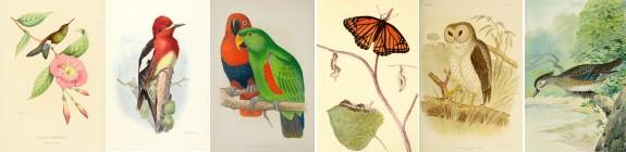 Birds & Butterflies collection