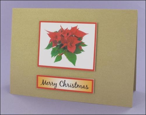 Project - Poinsettia Photo Motif Card