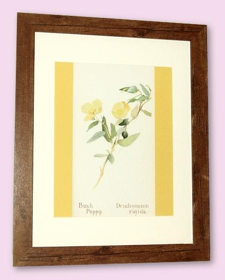 Project - Bush Poppy - A4 Print