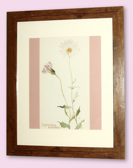Project - Mojave Aster - A4 Print