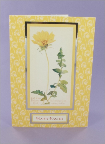 Project - Cut-leafed Balsam Root Easter card