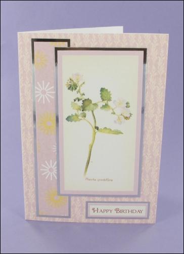 Project - Phacelia Grandiflora Birthday card
