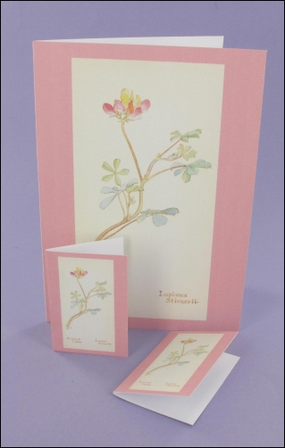 Project - Bi-Coloured Lupine Notecard & Tags