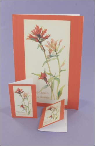 Project - Indian Paint Brush Notecard & Tags