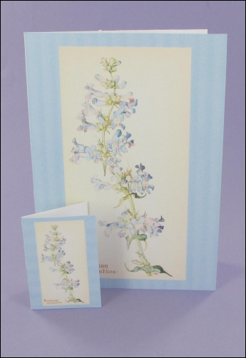 Project - Penstemon Notecard & Tags