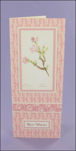 Project - Large Prickly Gilia Small Tall Card