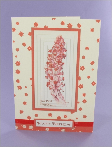 Project - Snow Plant Pyramage Card
